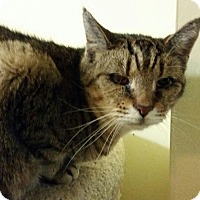 Adopt A Pet :: Bootsie - Maryville, TN