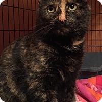 Adopt A Pet :: Patches - Somerset, KY
