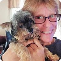 Adopt A Pet :: Macho - Plain City, OH