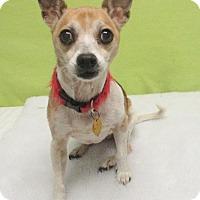 Adopt A Pet :: Bonnie - Austin, TX