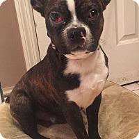 Adopt A Pet :: Theo - Jackson, TN