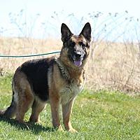 Adopt A Pet :: MADDY - Tully, NY