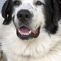 Adopt A Pet :: Bonnie in PA - Beacon, NY