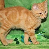 Adopt A Pet :: Karma (Updated Photos) - Marietta, OH