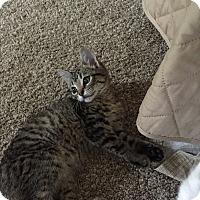 Adopt A Pet :: Cupid - Columbia, TN