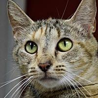 Adopt A Pet :: Diana - Nashville, IN