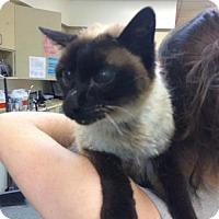 Adopt A Pet :: NEWBURY - Methuen, MA
