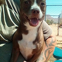 Adopt A Pet :: Max - Apple Valley, CA