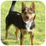 Photo 1 - Shepherd (Unknown Type)/Australian Cattle Dog Mix Dog for adoption in Rio Rancho, New Mexico - Cocoa
