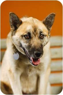 German Shepherd Dog Mix Dog for adoption in Portland, Oregon - Hazel