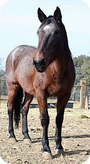 Quarterhorse/Other/Unknown Mix for adoption in El Dorado Hills, California - Ruby