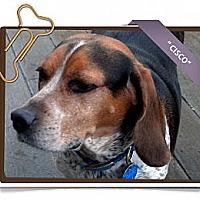 Adopt A Pet :: Cisco - Portland, OR