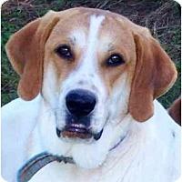 Adopt A Pet :: THELMA - Wakefield, RI