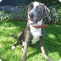 Adopt A Pet :: FRANKIE - West Hills, CA