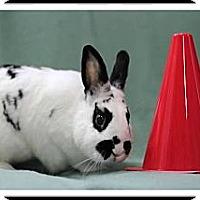 Adopt A Pet :: Tiberius - Williston, FL