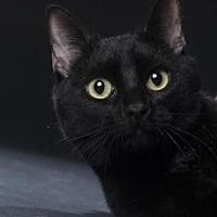 Adopt A Pet :: Banksy - Denver, CO