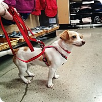 Adopt A Pet :: Maxwell - Cerritos, CA