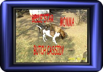 Terrier (Unknown Type, Medium) Mix Puppy for adoption in Cushing, Oklahoma - x BELLE STAR adopt