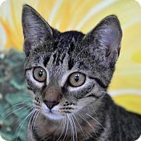 Adopt A Pet :: Molly - Englewood, FL