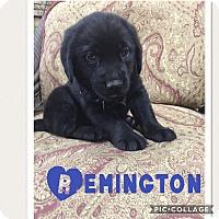 Adopt A Pet :: Remington - Glastonbury, CT