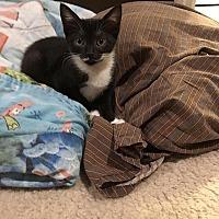 Adopt A Pet :: Pez - Tampa, FL