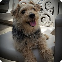 Adopt A Pet :: Mickey - Mississauga, ON