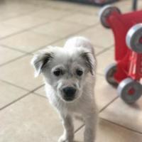 Adopt A Pet :: Abbott - San Antonio, TX
