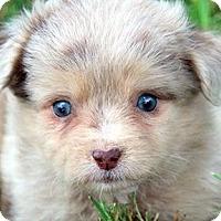 Adopt A Pet :: MEG(OUR