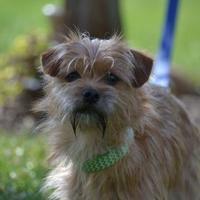 Adopt A Pet :: Pierce - Fairfield, OH