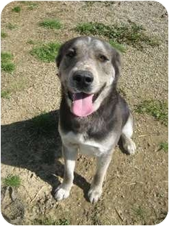 Hound (Unknown Type)/Shepherd (Unknown Type) Mix Dog for adoption in Florence, Indiana - Buddy