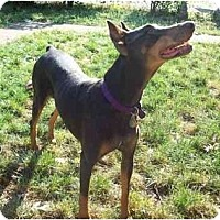 Adopt A Pet :: Roxie--adopted! - New Richmond, OH