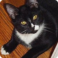 Adopt A Pet :: Skippy - Kensington, MD