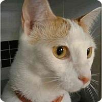 Adopt A Pet :: Kooper - Little Falls, NJ