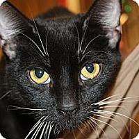 Adopt A Pet :: Hope - Santa Monica, CA