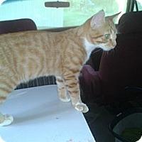 Adopt A Pet :: Oz - Acme, PA