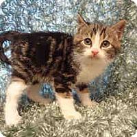 Adopt A Pet :: Art (& Taz) - Arlington, VA
