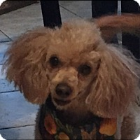 Adopt A Pet :: LIZZIE - Fort Worth, TX