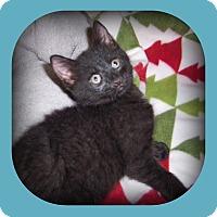 Adopt A Pet :: FINN - HE'S A PURRING MACHINE! - South Plainfield, NJ