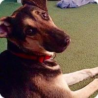 Adopt A Pet :: Dahlia - North Bend, WA