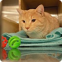 Adopt A Pet :: Quincy(woodbury petsmart) - Roseville, MN