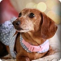 Adopt A Pet :: Gretchen - Omaha, NE