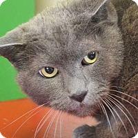 Adopt A Pet :: Sylvester - Rancho Santa Fe, CA