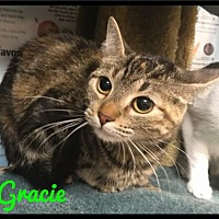 Adopt A Pet :: Gracie - 443 / 2017 - Maumelle, AR
