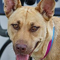 Adopt A Pet :: Vicky von Varburg - Los Angeles, CA