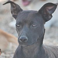 Adopt A Pet :: Dannie Big Dog - Cranston, RI
