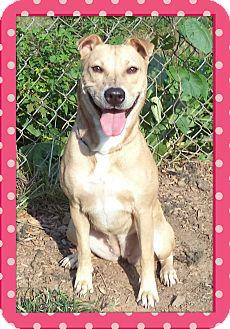 Labrador Retriever Mix Dog for adoption in Marietta, Georgia - AMORE