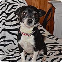 Adopt A Pet :: Tillman - Westfield, IN