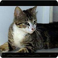 Adopt A Pet :: Meanieweenie - Mobile, AL