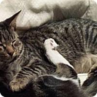 Adopt A Pet :: Carter - Mobile, AL