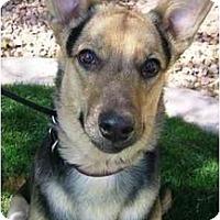 Adopt A Pet :: Indy - Gilbert, AZ